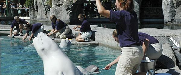 Mystic Aquarium Military Discount